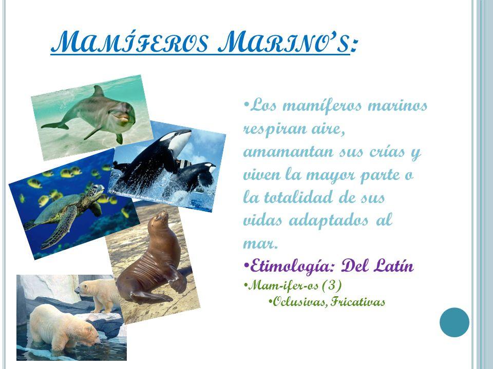 M AMÍFEROS M ARINO S : Los mamíferos marinos respiran aire, amamantan sus crías y viven la mayor parte o la totalidad de sus vidas adaptados al mar. E