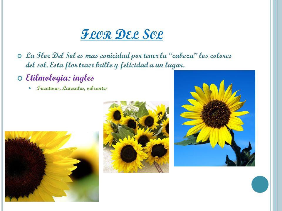 F LOR D EL S OL La Flor Del Sol es mas conicidad por tener la cabeza los colores del sol. Esta flor traer brillo y felicidad a un lugar. Etilmologia: