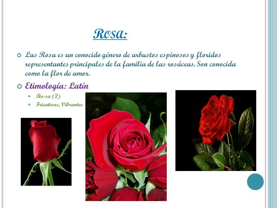R OSA : Las Rosa es un conocido género de arbustos espinosos y floridos representantes principales de la familia de las rosáceas. Son conocida como la