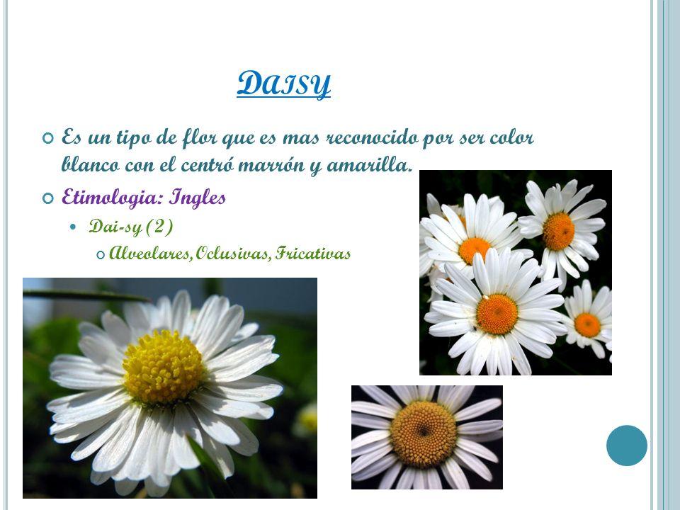 D AISY Es un tipo de flor que es mas reconocido por ser color blanco con el centró marrón y amarilla. Etimologia: Ingles Dai-sy (2) Alveolares, Oclusi