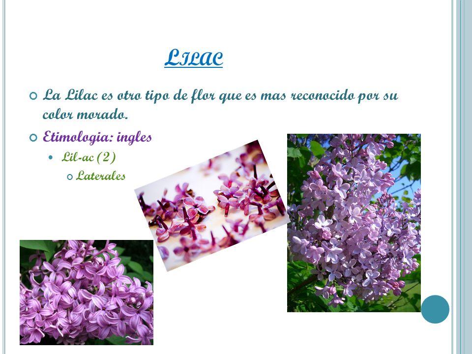 L ILAC La Lilac es otro tipo de flor que es mas reconocido por su color morado. Etimologia: ingles Lil-ac (2) Laterales