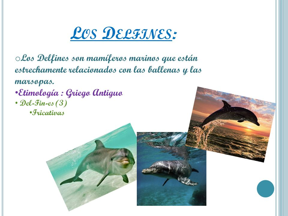 L OS D ELFINES : o Los Delfines son mamíferos marinos que están estrechamente relacionados con las ballenas y las marsopas. Etimología : Griego Antigu