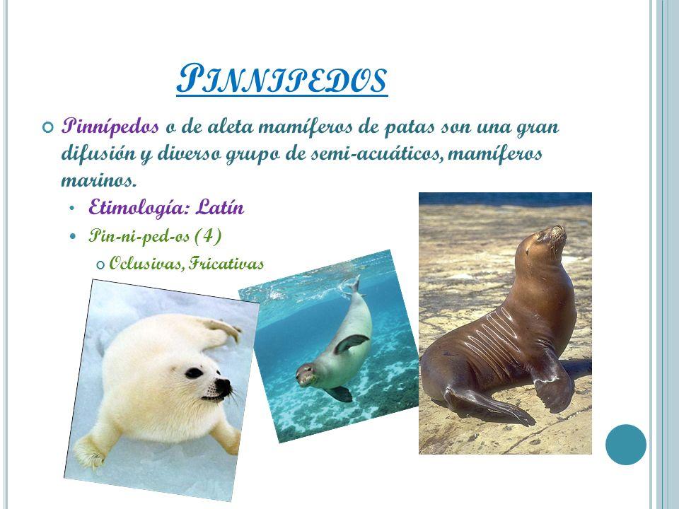 P INNIPEDOS Pinnípedos o de aleta mamíferos de patas son una gran difusión y diverso grupo de semi-acuáticos, mamíferos marinos. Etimología: Latín Pin