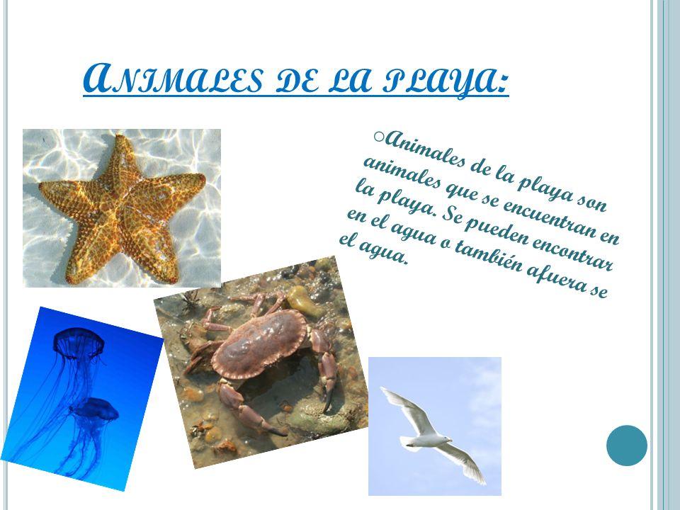 A NIMALES DE LA PLAYA : o Animales de la playa son animales que se encuentran en la playa. Se pueden encontrar en el agua o también afuera se el agua.