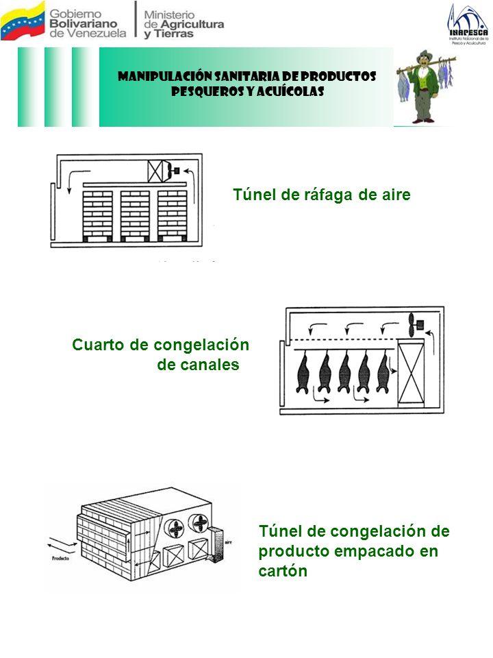 Túnel de ráfaga de aire Cuarto de congelación de canales Túnel de congelación de producto empacado en cartón Manipulación Sanitaria de Productos Pesqu