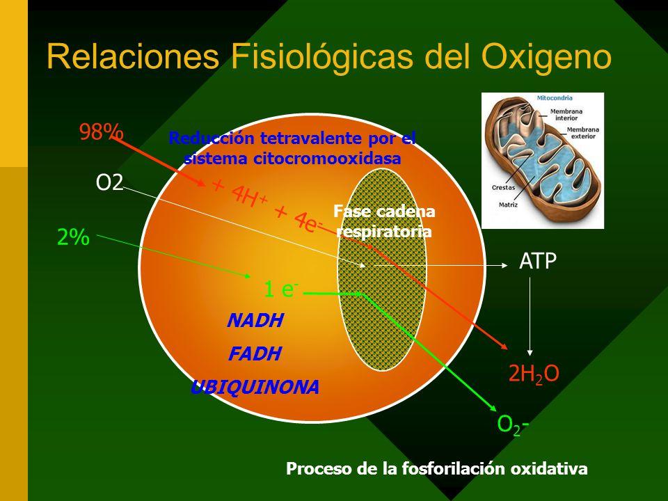 Relaciones Fisiológicas del Oxigeno O2 ATP 98% + 4H + + 4e - 2H 2 O 2% 1 e - O2-O2- NADH FADH UBIQUINONA Reducción tetravalente por el sistema citocromooxidasa Fase cadena respiratoria Proceso de la fosforilación oxidativa