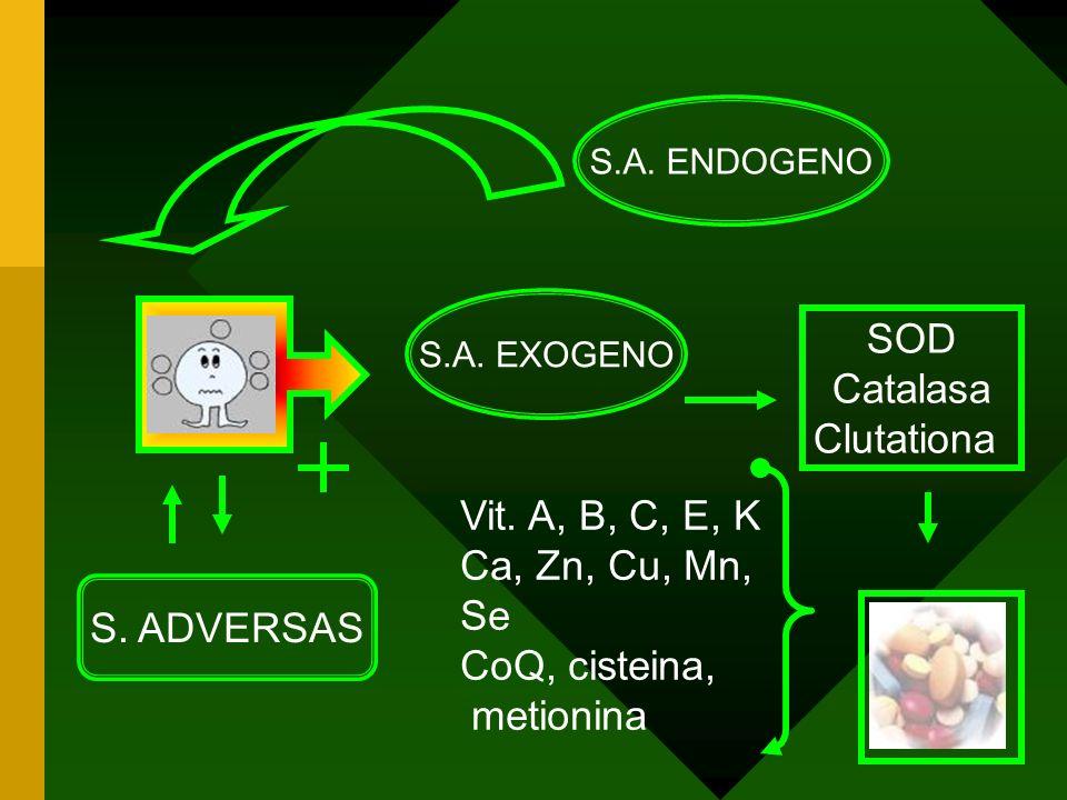 RL S.A.ENDOGENO S. ADVERSAS S.A. EXOGENO Vit.