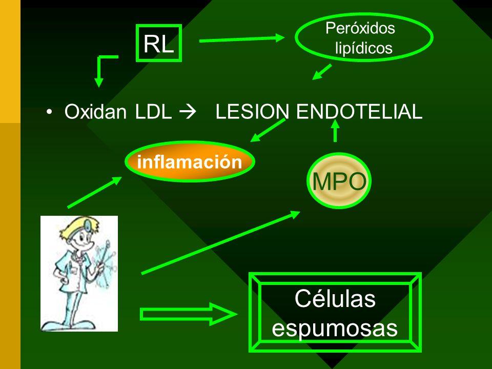 Oxidan LDL LESION ENDOTELIAL Peróxidos lipídicos MPO inflamación Células espumosas RL