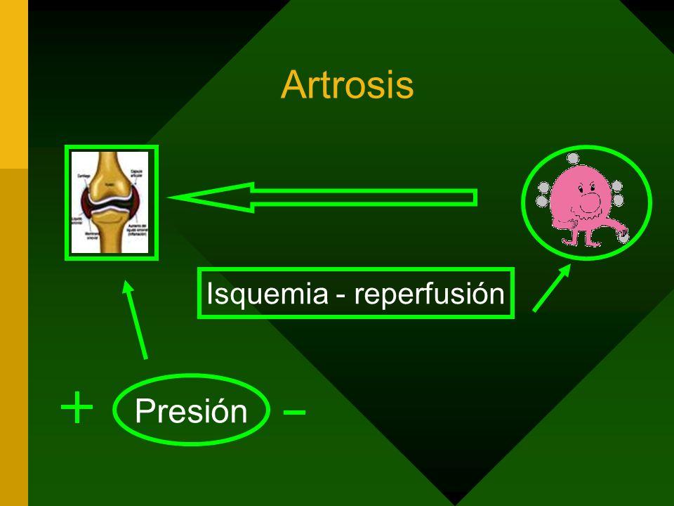 Artrosis Presión Isquemia - reperfusión