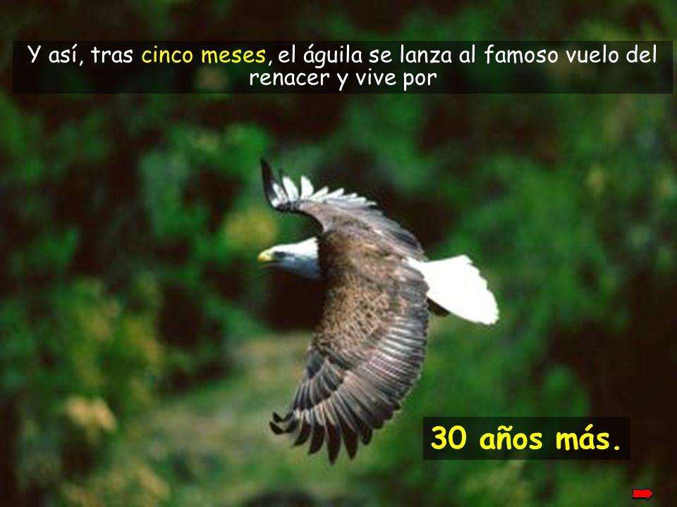 Cuando las nuevas garras han crecido, el águila comienza a arrancarse las viejas plumas. Cuando las nuevas garras han crecido, el águila comienza a ar