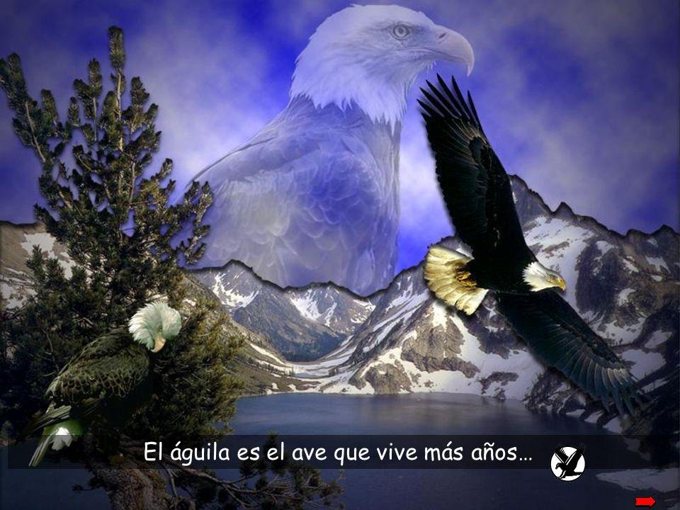 …y como un águila se renueva tu juventud (Salmo 102)
