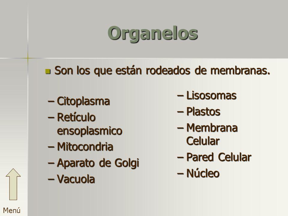 Organelos –C–C–C–Citoplasma –R–R–R–Retículo ensoplasmico –M–M–M–Mitocondria –A–A–A–Aparato de Golgi –V–V–V–Vacuola –L–Lisosomas –P–Plastos –M–Membrana