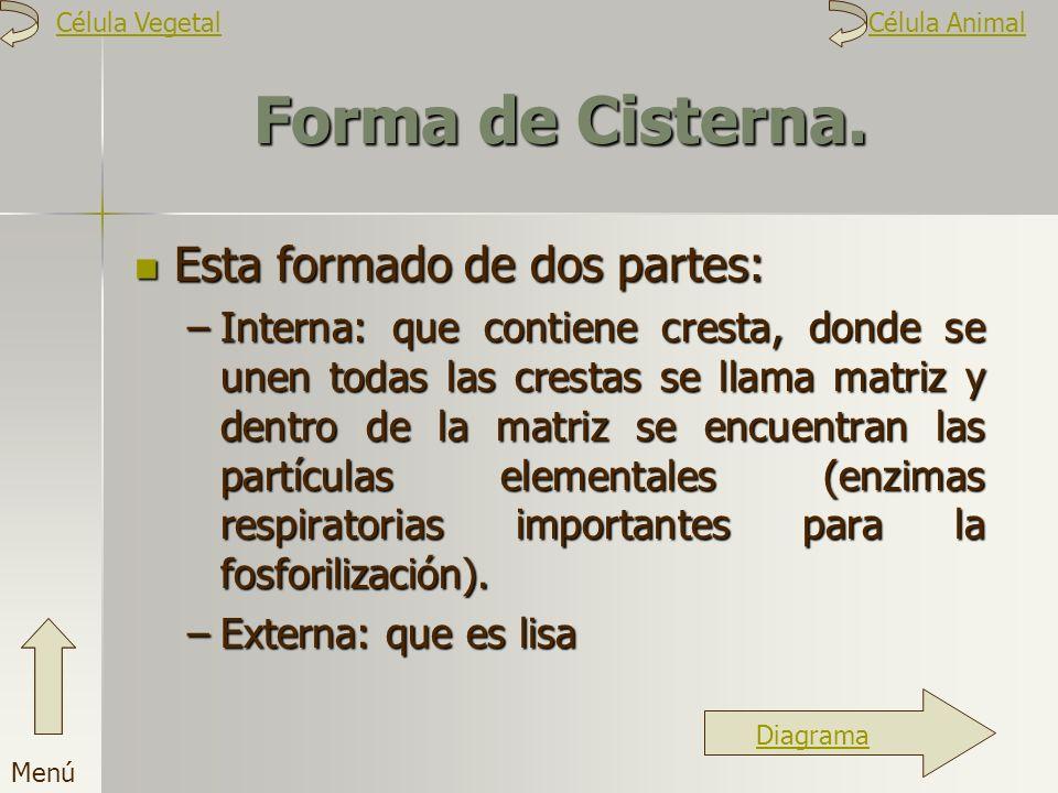 Forma de Cisterna. Esta formado de dos partes: –I–I–I–Interna: que contiene cresta, donde se unen todas las crestas se llama matriz y dentro de la mat