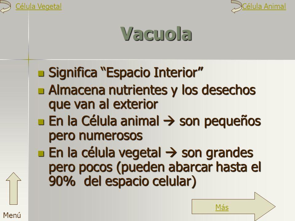 Vacuola Significa Espacio Interior Almacena nutrientes y los desechos que van al exterior En la Célula animal son pequeños pero numerosos En la célula