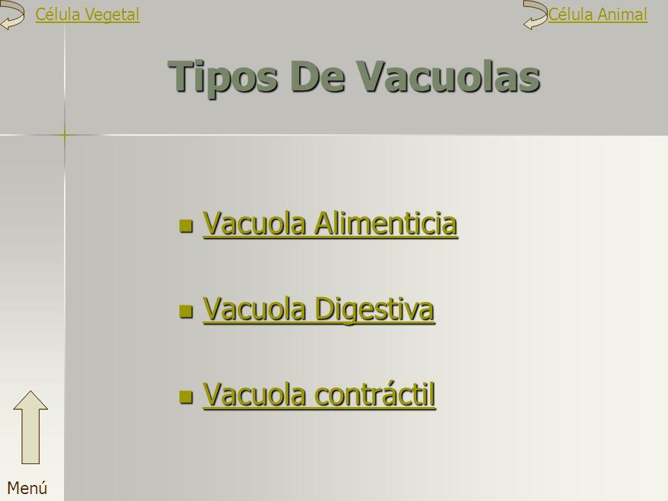 Tipos De Vacuolas V V aaaa cccc uuuu oooo llll aaaa A A A A llll iiii mmmm eeee nnnn tttt iiii cccc iiii aaaa V aaaa cccc uuuu oooo llll aaaa D D D D