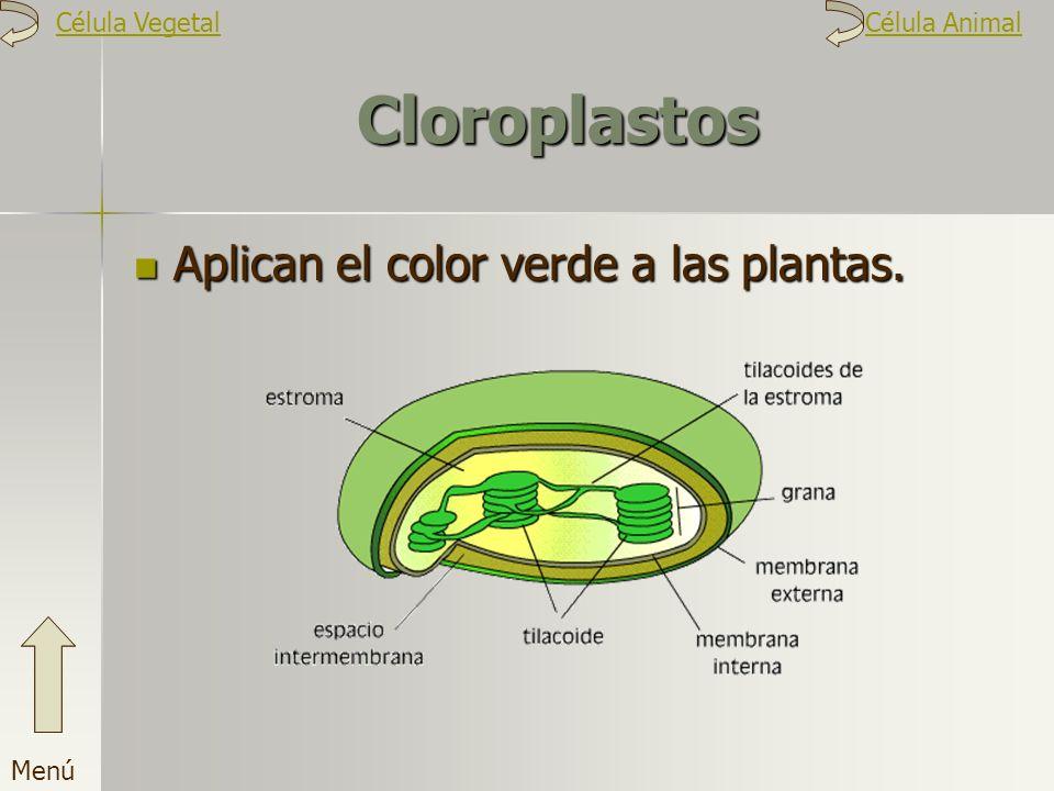 Cloroplastos Aplican el color verde a las plantas. Menú Célula VegetalCélula Animal