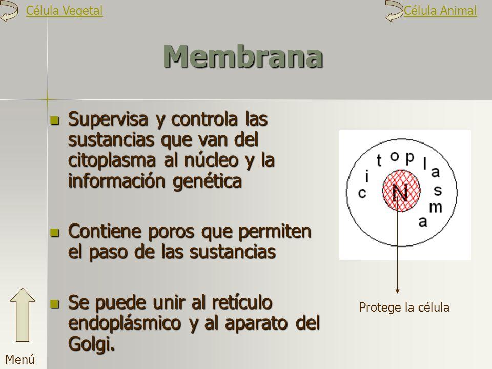Membrana Supervisa y controla las sustancias que van del citoplasma al núcleo y la información genética Contiene poros que permiten el paso de las sus