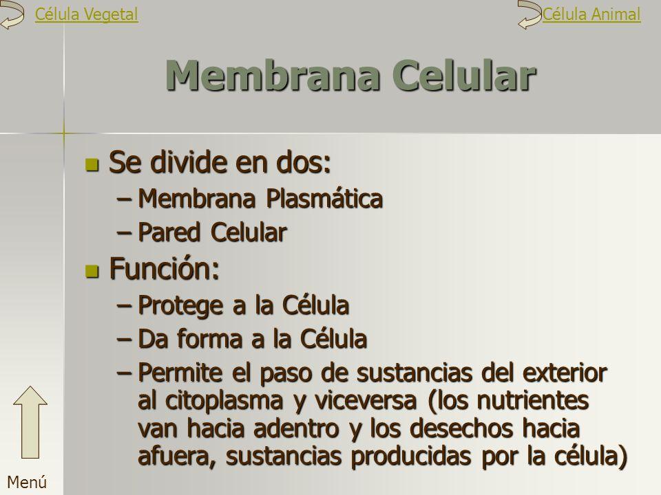 Membrana Celular Se divide en dos: –M–M–M–Membrana Plasmática –P–P–P–Pared Celular Función: –P–P–P–Protege a la Célula –D–D–D–Da forma a la Célula –P–