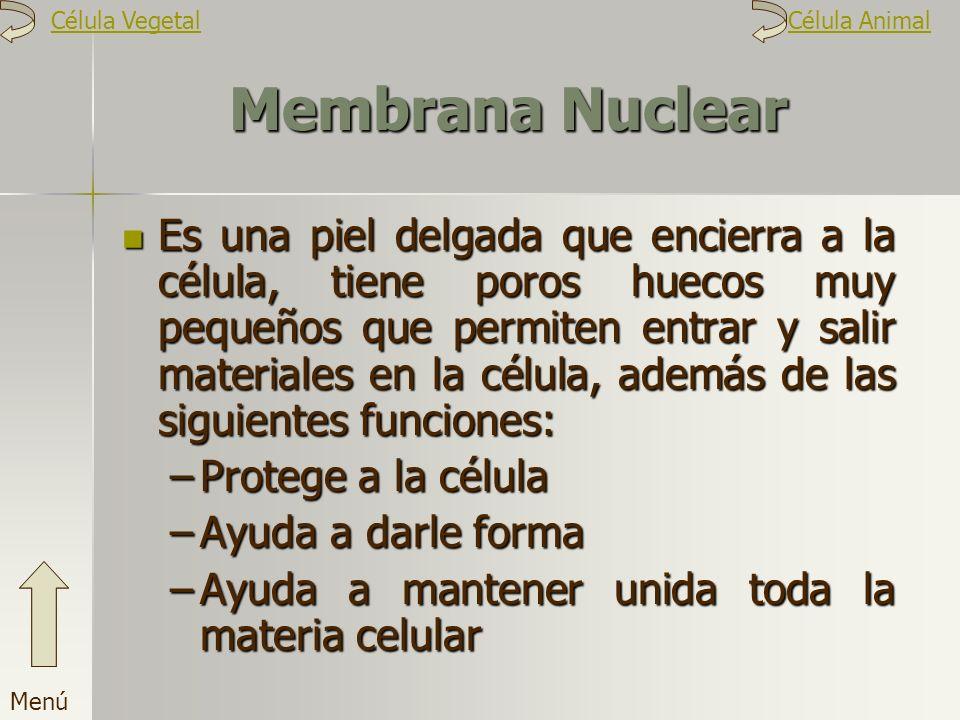 Membrana Nuclear Es una piel delgada que encierra a la célula, tiene poros huecos muy pequeños que permiten entrar y salir materiales en la célula, ad