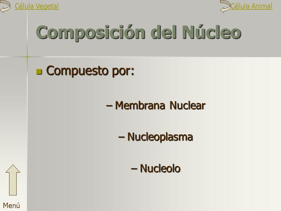 Composición del Núcleo Compuesto por: –M–M–M–Membrana Nuclear –N–N–N–Nucleoplasma –N–N–N–Nucleolo Menú Célula VegetalCélula Animal