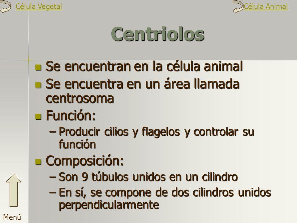 Centriolos Se encuentran en la célula animal Se encuentra en un área llamada centrosoma Función: –P–P–P–Producir cilios y flagelos y controlar su func