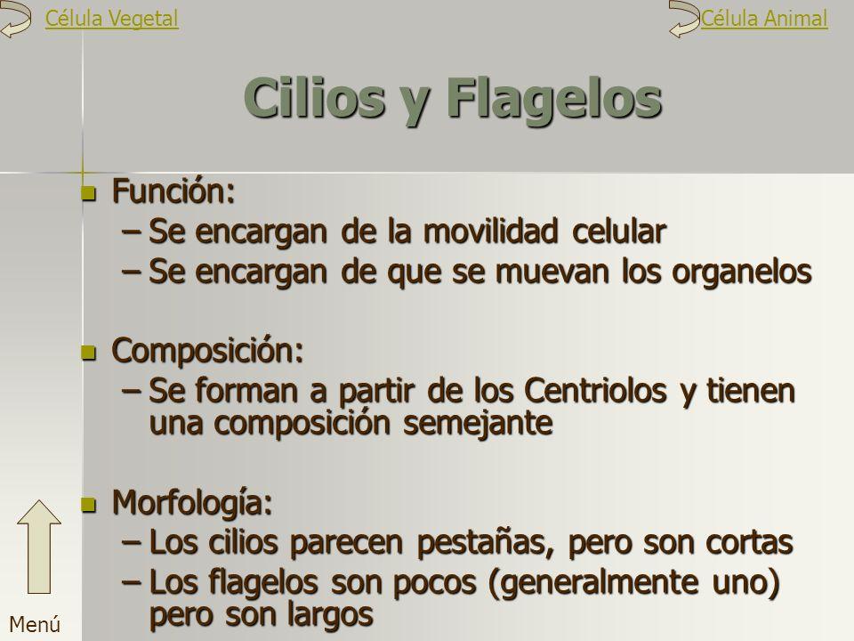 Cilios y Flagelos Función: –S–S–S–Se encargan de la movilidad celular –S–S–S–Se encargan de que se muevan los organelos Composición: –S–S–S–Se forman