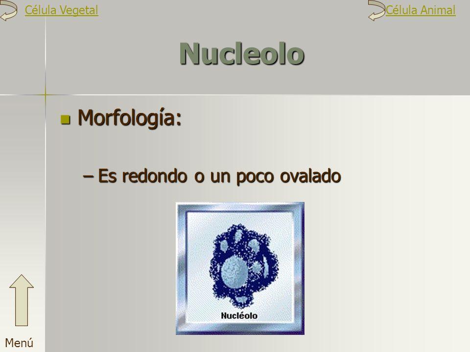 Nucleolo Morfología: –E–E–E–Es redondo o un poco ovalado Menú Célula VegetalCélula Animal