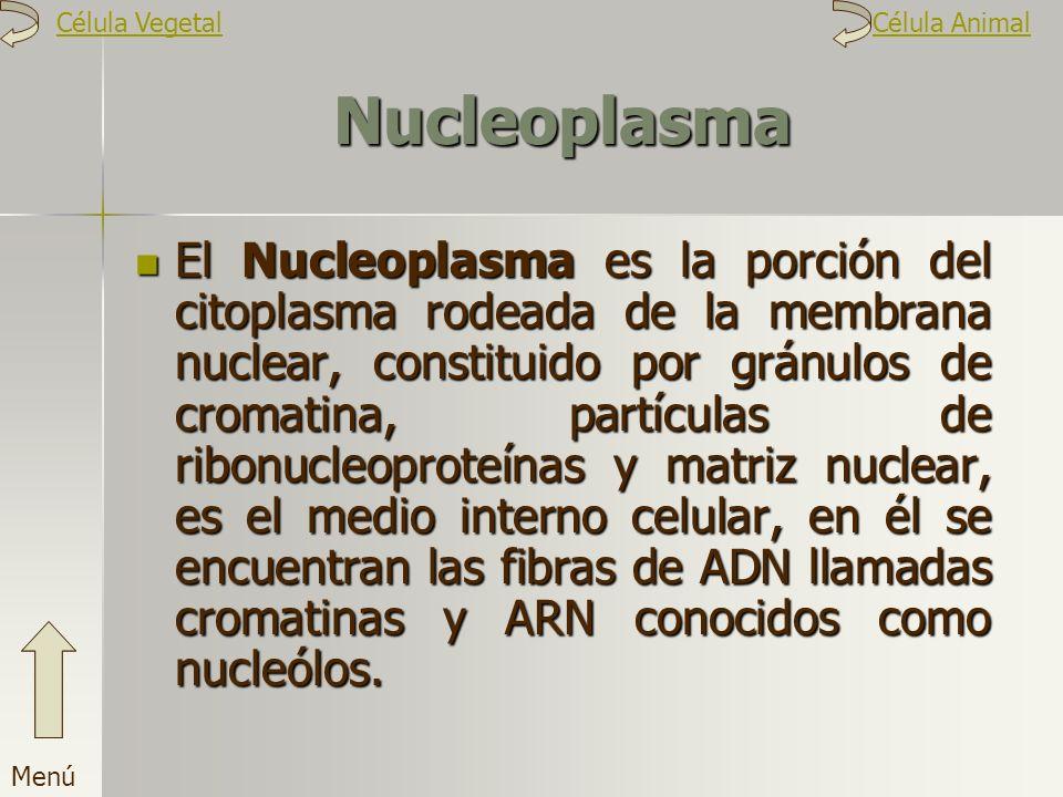 Nucleoplasma El Nucleoplasma es la porción del citoplasma rodeada de la membrana nuclear, constituido por gránulos de cromatina, partículas de ribonuc