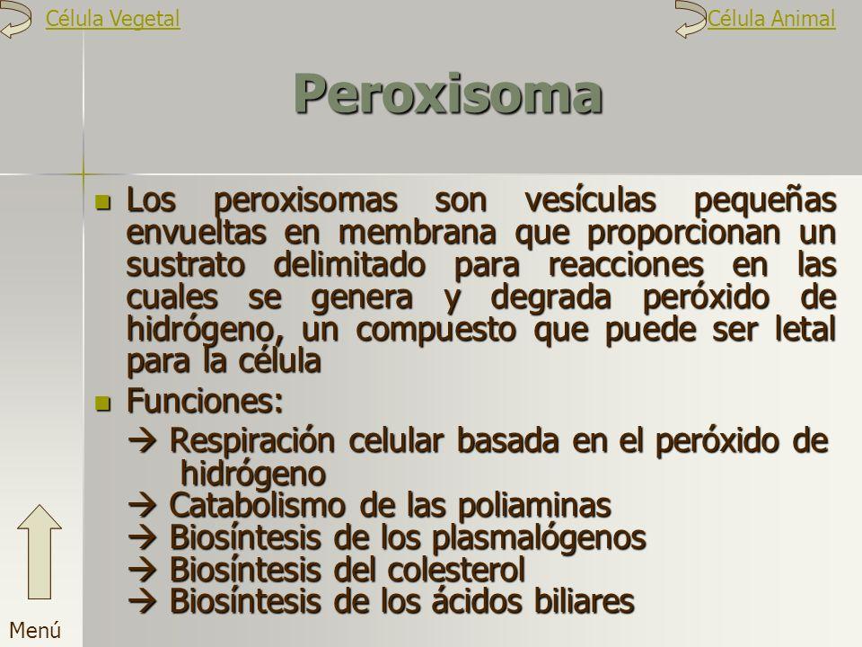 Peroxisoma Los peroxisomas son vesículas pequeñas envueltas en membrana que proporcionan un sustrato delimitado para reacciones en las cuales se gener
