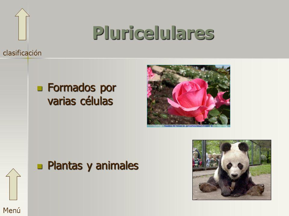 Pluricelulares Formados por varias células Plantas y animales Menú clasificación