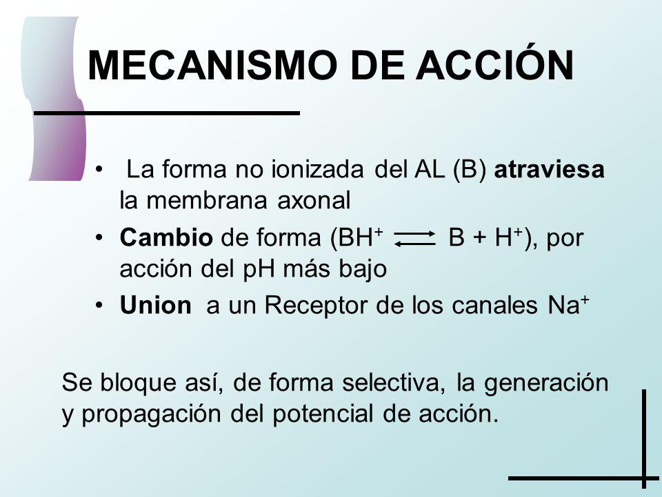 MECANISMO DE ACCIÓN La forma no ionizada del AL (B) atraviesa la membrana axonal Cambio de forma (BH + B + H + ), por acción del pH más bajo Union a u