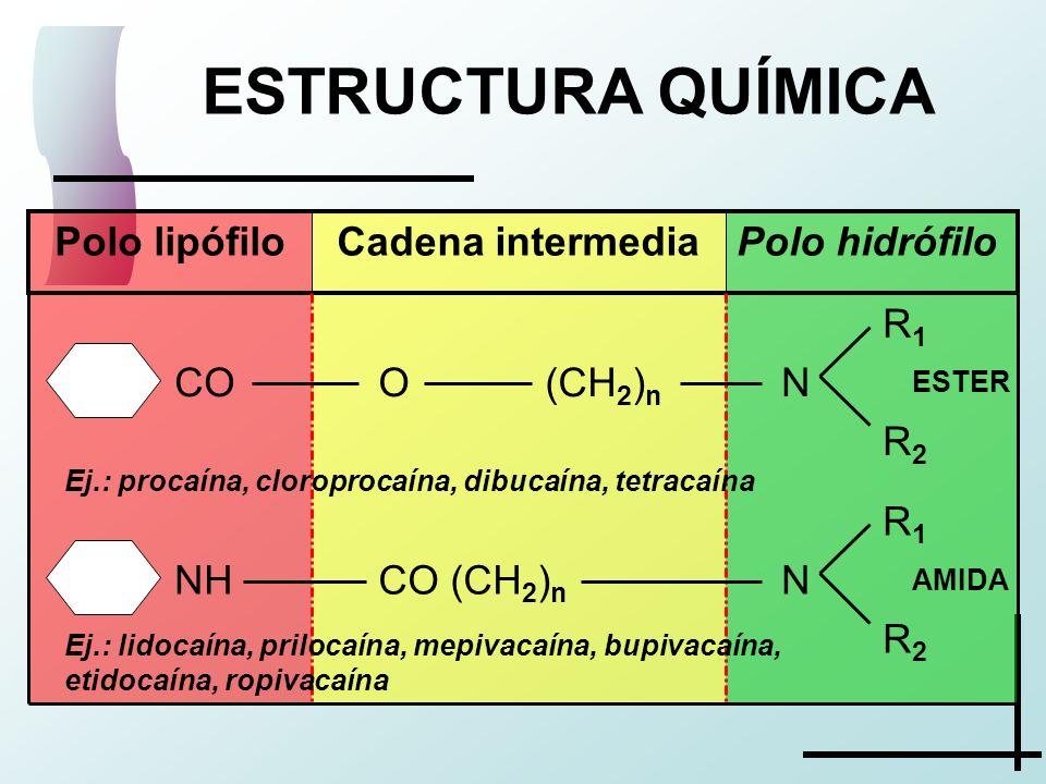 ESTRUCTURA QUÍMICA R 1 N R 2 CO (CH 2 ) n NH R 1 N R 2 O (CH 2 ) n CO Polo hidrófiloCadena intermediaPolo lipófilo ESTER AMIDA Ej.: procaína, cloropro
