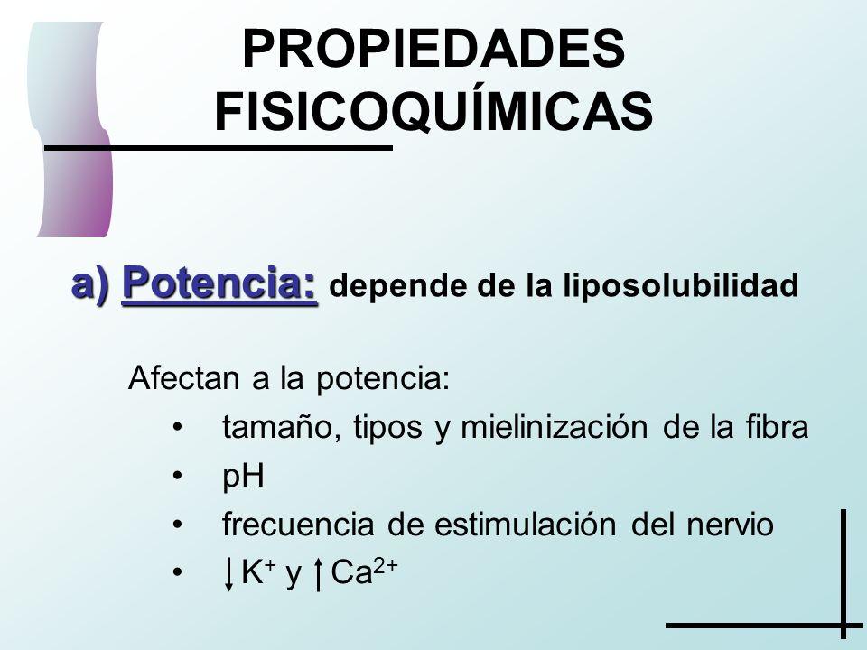 Afectan a la potencia: tamaño, tipos y mielinización de la fibra pH frecuencia de estimulación del nervio K + y Ca 2+ PROPIEDADES FISICOQUÍMICAS a) Po