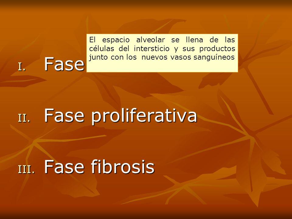 I. Fase exudativa II. Fase proliferativa III. Fase fibrosis El espacio alveolar se llena de las células del intersticio y sus productos junto con los