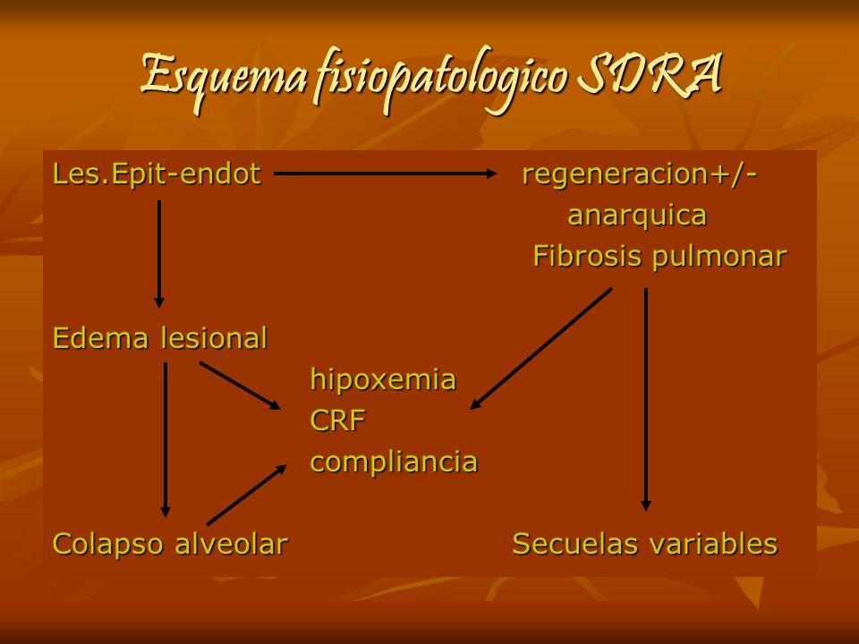 Esquema fisiopatologico SDRA Les.Epit-endot regeneracion+/- anarquica Fibrosis pulmonar Fibrosis pulmonar Edema lesional hipoxemia CRF CRFcompliancia