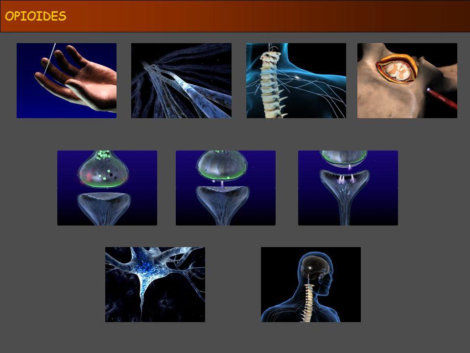 OPIOIDE R μ κ δ P G EXCITABILIDAD NEURONAL ESPINALES SUPRAESPINALES PERIFÉRICOS Fisiológicos?.