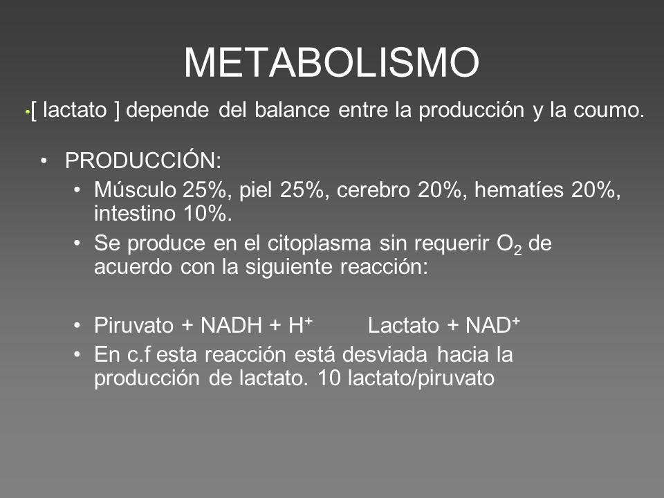 METABOLISMO PRODUCCIÓN: Músculo 25%, piel 25%, cerebro 20%, hematíes 20%, intestino 10%.