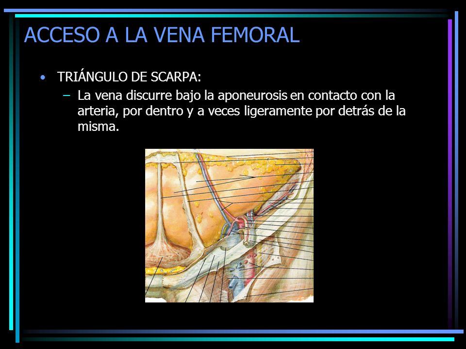 ACCESO A LA VENA FEMORAL TRIÁNGULO DE SCARPA: –La vena discurre bajo la aponeurosis en contacto con la arteria, por dentro y a veces ligeramente por d