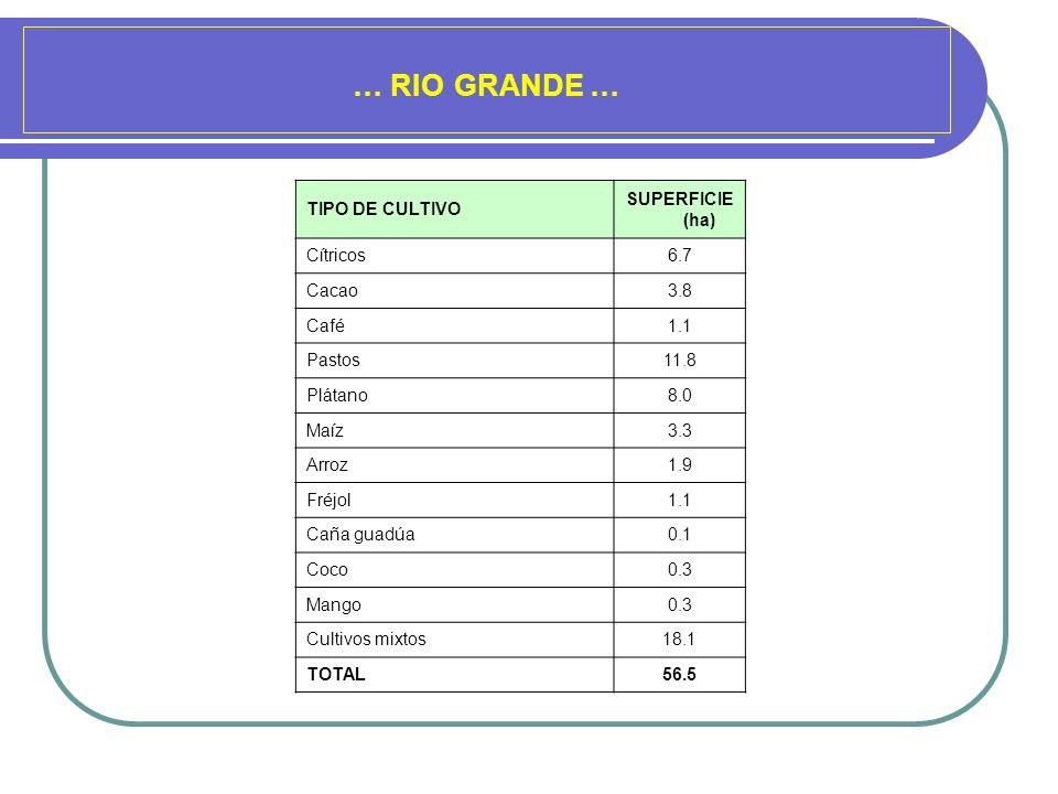 … RIO GRANDE … TIPO DE CULTIVO SUPERFICIE (ha) Cítricos6.7 Cacao3.8 Café1.1 Pastos11.8 Plátano8.0 Maíz3.3 Arroz1.9 Fréjol1.1 Caña guadúa0.1 Coco0.3 Ma