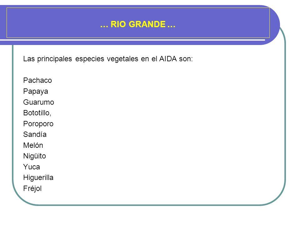 … RIO GRANDE … Las principales especies vegetales en el AIDA son: Pachaco Papaya Guarumo Bototillo, Poroporo Sandía Melón Nigüito Yuca Higuerilla Fréj