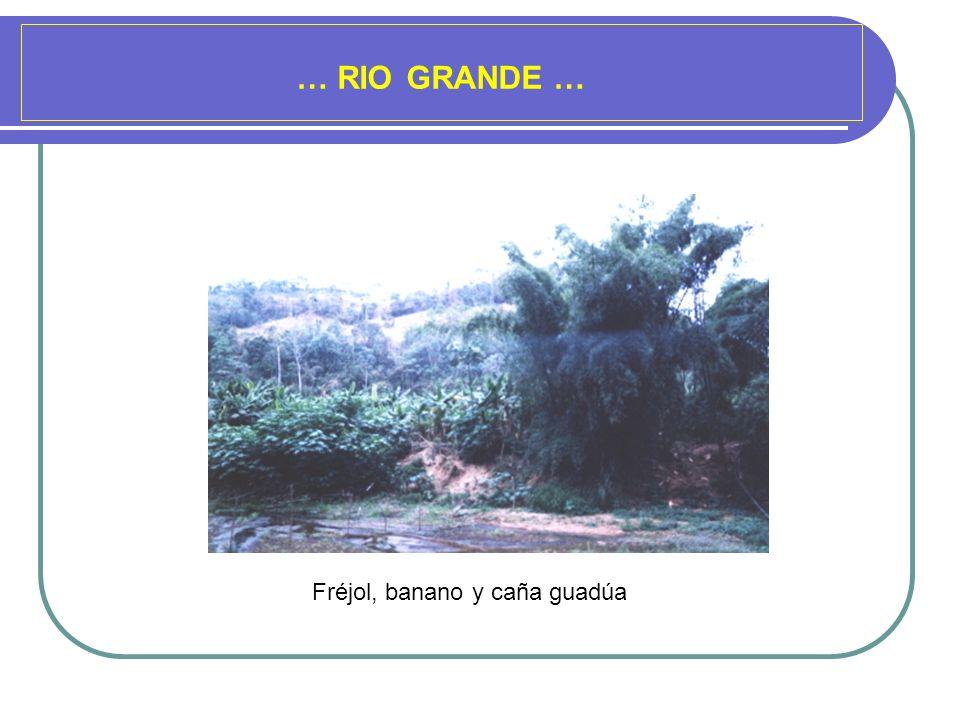 … RIO GRANDE … Fréjol, banano y caña guadúa