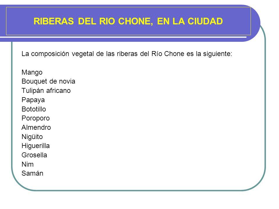 RIBERAS DEL RIO CHONE, EN LA CIUDAD La composición vegetal de las riberas del Río Chone es la siguiente: Mango Bouquet de novia Tulipán africano Papay