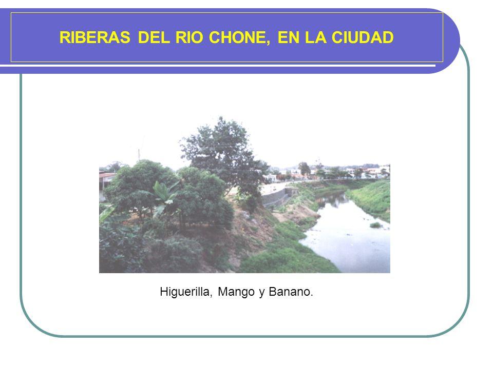 RIBERAS DEL RIO CHONE, EN LA CIUDAD Higuerilla, Mango y Banano.