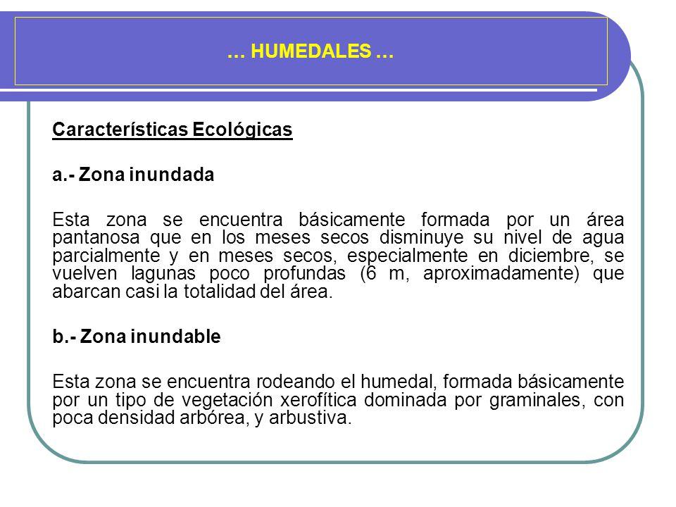 … HUMEDALES … Características Ecológicas a.- Zona inundada Esta zona se encuentra básicamente formada por un área pantanosa que en los meses secos dis
