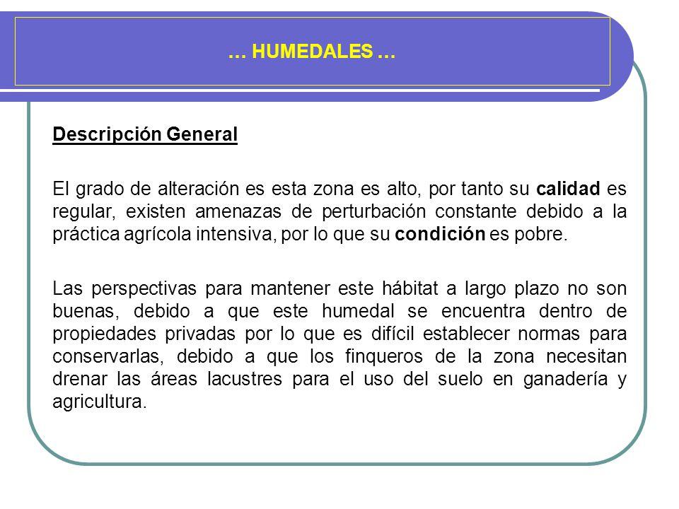 … HUMEDALES … Descripción General El grado de alteración es esta zona es alto, por tanto su calidad es regular, existen amenazas de perturbación const