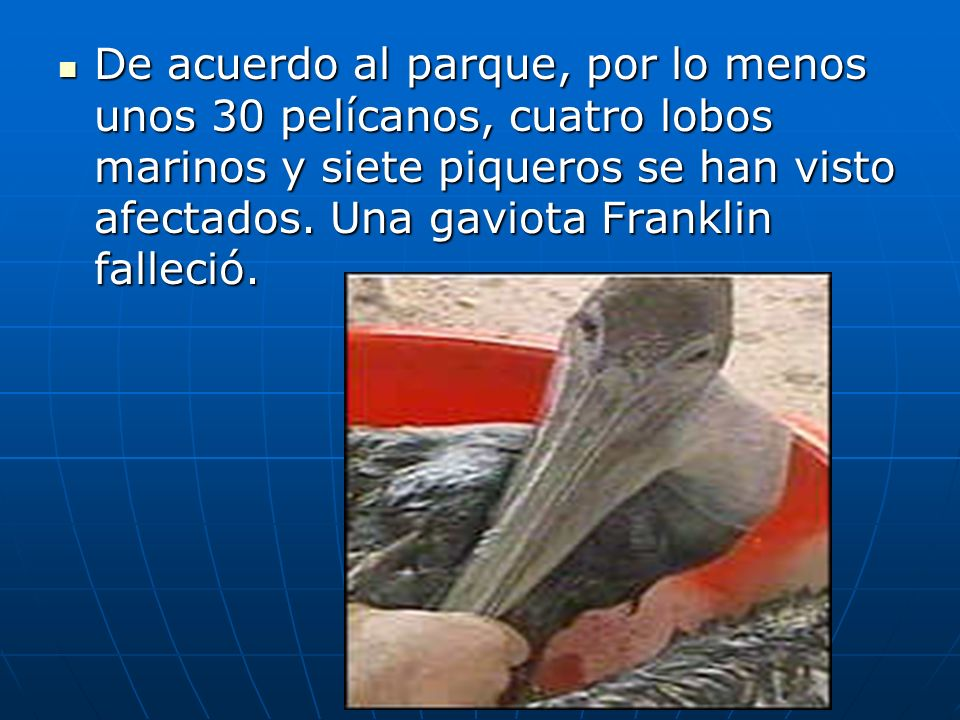 De acuerdo al parque, por lo menos unos 30 pelícanos, cuatro lobos marinos y siete piqueros se han visto afectados.