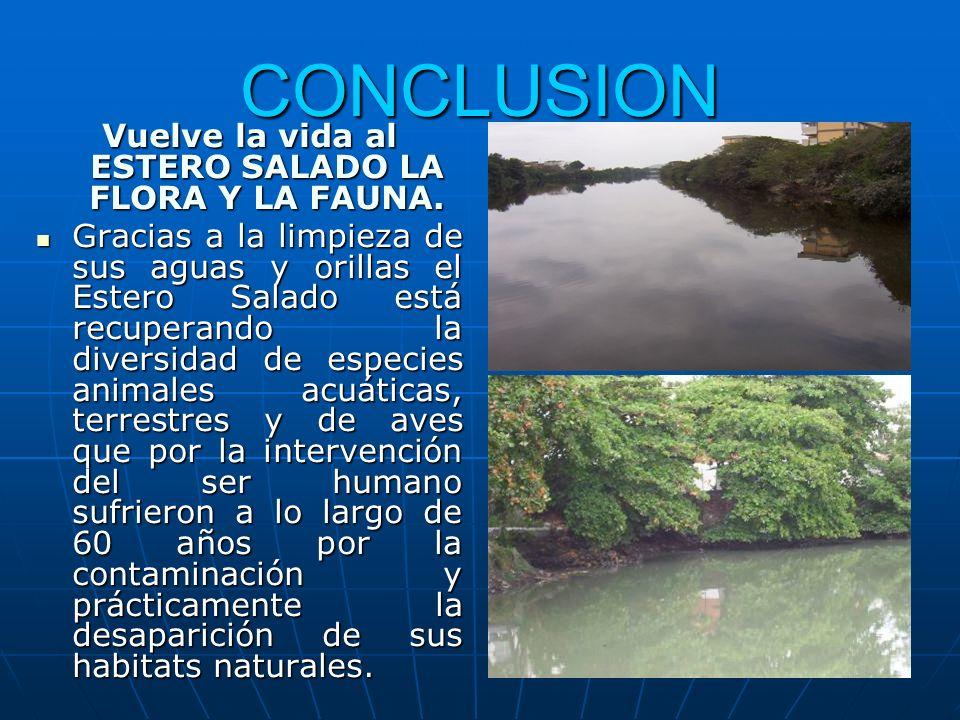 CONCLUSION Vuelve la vida al ESTERO SALADO LA FLORA Y LA FAUNA. Gracias a la limpieza de sus aguas y orillas el Estero Salado está recuperando la dive