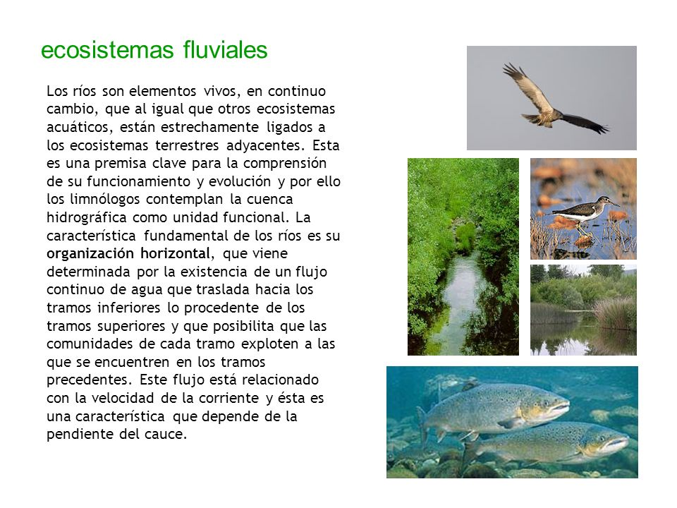 ecosistemas fluviales Los ríos son elementos vivos, en continuo cambio, que al igual que otros ecosistemas acuáticos, están estrechamente ligados a lo