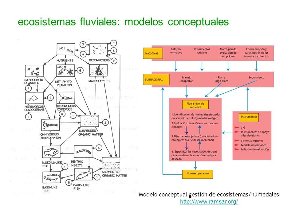 ecosistemas fluviales: modelos conceptuales Modelo conceptual gestión de ecosistemas/humedales http://www.ramsar.org/