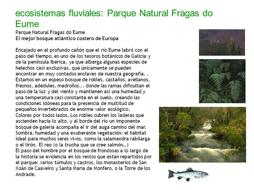 ecosistemas fluviales: Parque Natural Fragas do Eume Parque Natural Fragas do Eume El mejor bosque atlántico costero de Europa Encajado en el profundo